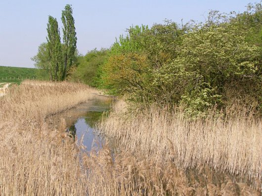 Willow Tree Fen