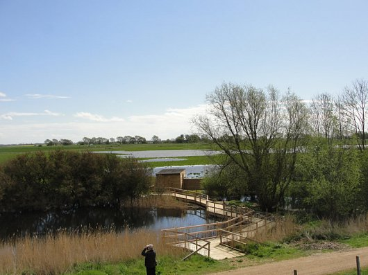 Willow Tree Fen hide