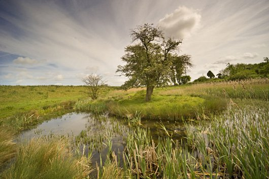Dipping Pools at Willow Tree Fen
